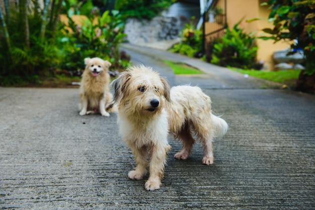 Due cani bagnati in isola tropicale dopo la pioggia
