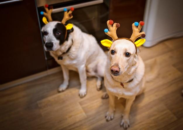 Due cani con maschera di cervo