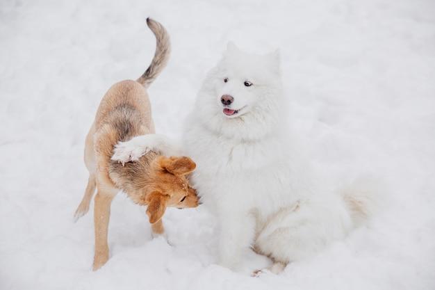 Due cani divertenti che giocano sulla neve in una foresta. cani giocosi