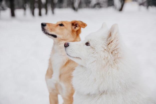 Due cani divertenti che si siedono sulla neve nella foresta