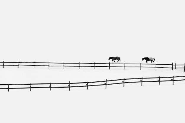Due cavalli da recinzioni su un campo nevoso