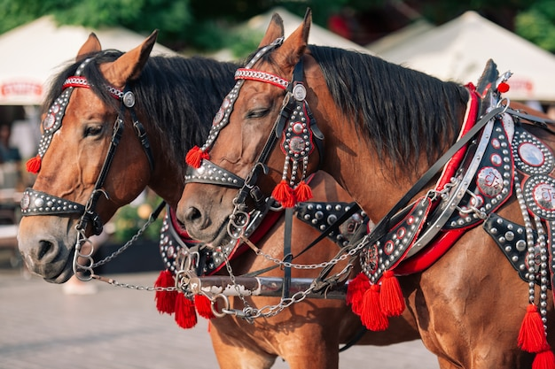 Due cavalli decorati per i turisti in sella a una carrozza.