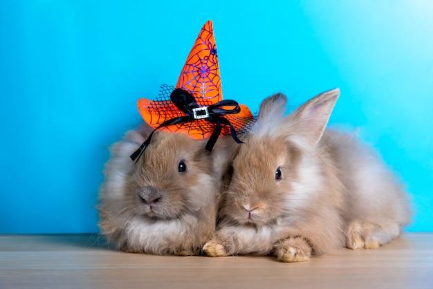 Due conigli carini, pelosi, dalle orecchie lunghe che si siedono insieme su una bibbia di legno con sfondo blu
