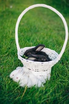 Due conigli neri in un cestino bianco sull'erba verde. coniglietto di pasqua