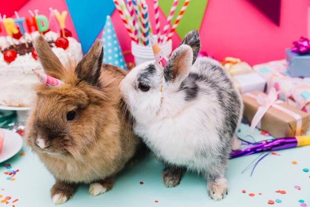 Due conigli seduti davanti alla decorazione di compleanno