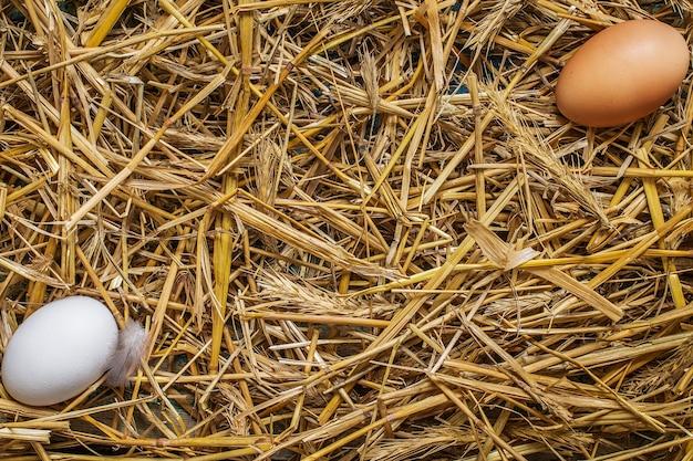 Due eggss che si trovano nel fieno.