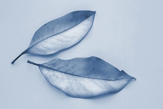 Due foglie in classico blu 2020