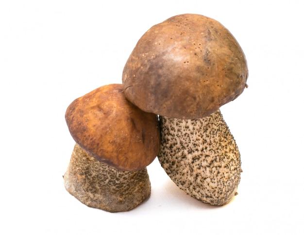 Due funghi porcini isolati su bianco
