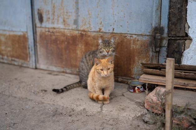 Due gatti sono seduti per terra.