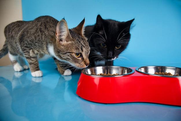 Due gatti svegli che si alimentano da una ciotola rossa