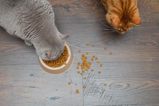 Due grandi gatti grigi e rossi mangiano cibo per gatti secco da una ciotola. copyspace.