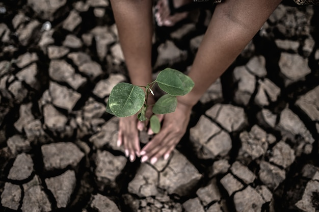 Due mani stanno piantando alberi e terreno asciutto e screpolato in condizioni di riscaldamento globale.