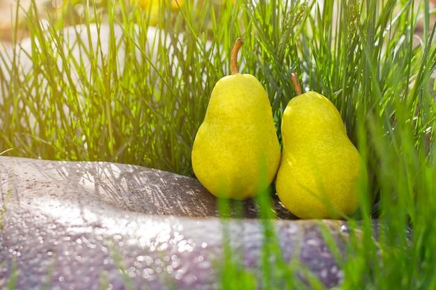 Due pere gialle in erba verde. pere in giardino