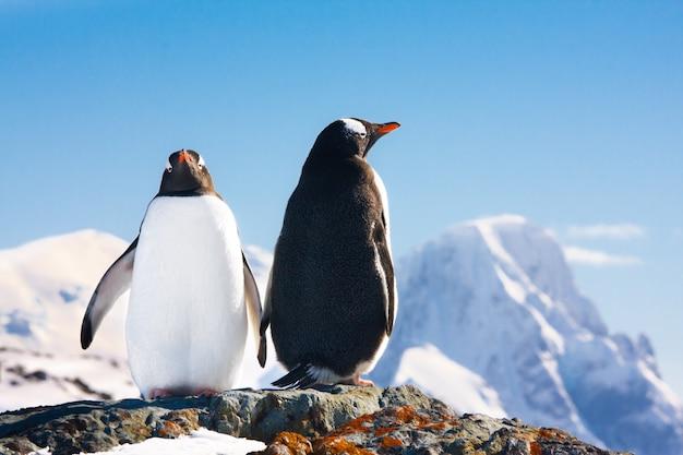 Due pinguini che sognano