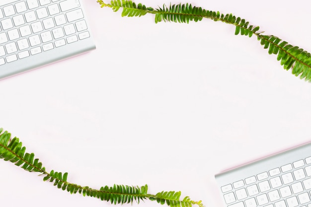 Due rami di piante con tastiere bianche su sfondo bianco