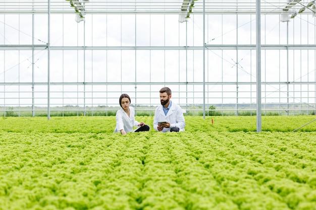 Due ricerche uomo e donna esaminano la vegetazione con un tablet in una serra tutta bianca