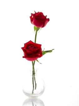 Due rose rosse in un vaso di vetro su bianco