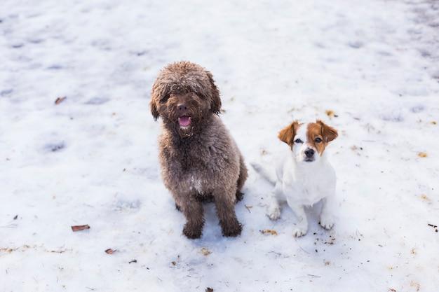 Due simpatici cani in montagna nella neve. animali domestici all'aperto in inverno.