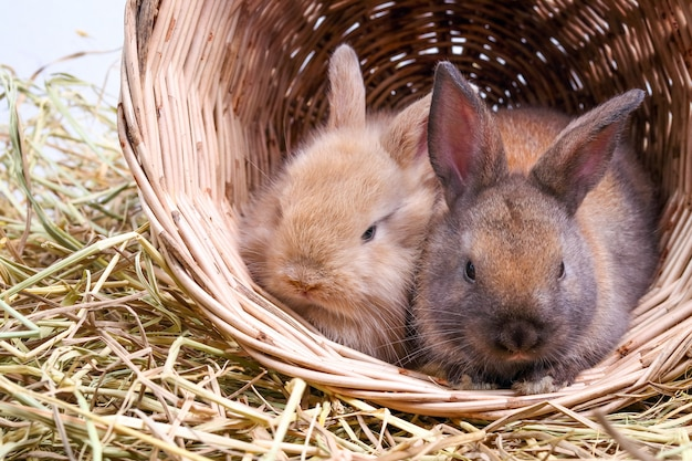Due simpatici coniglietti amano giocare maliziosamente in cesti di legno e paglia.