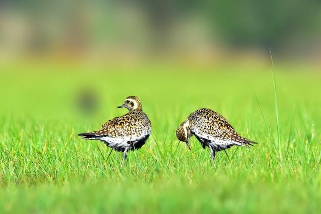 Due uccelli si rilassano nel campo verde