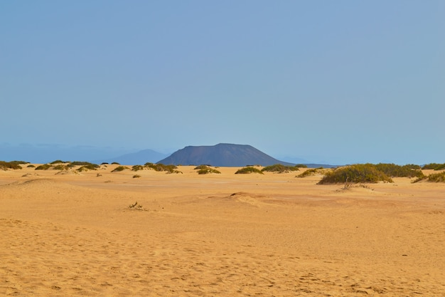 Dune di corralejo con vegetazione e orme