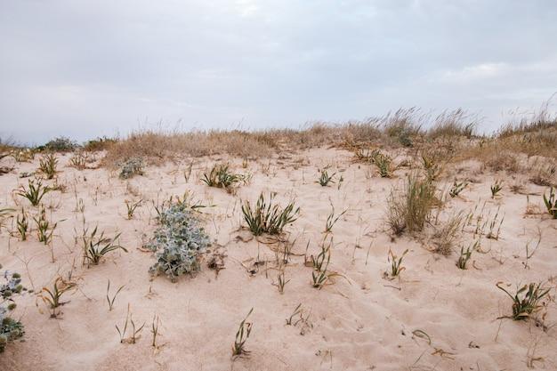 Dune di sabbia con vegetazione