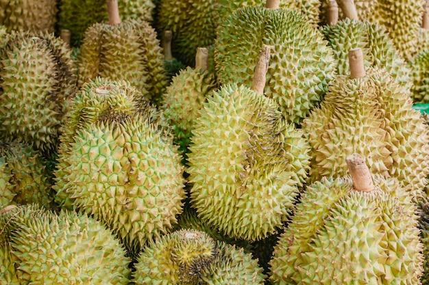 Durian fresco sull'albero in frutteto.