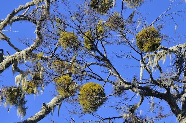 E la bellissima flora in patagonia durante il giorno