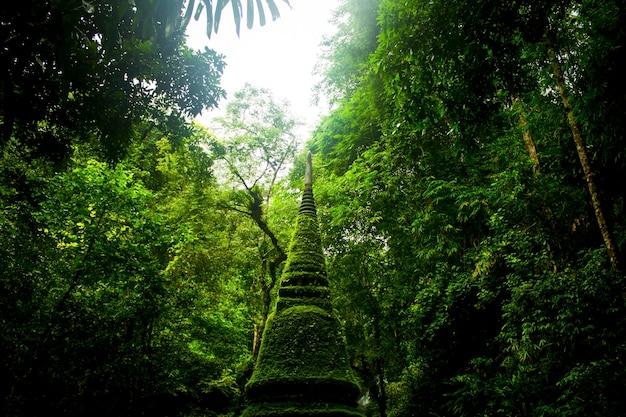 Ecologia ambientale natura all'aperto organico