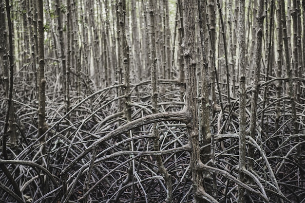 Ecologia della foresta di mangrovie.