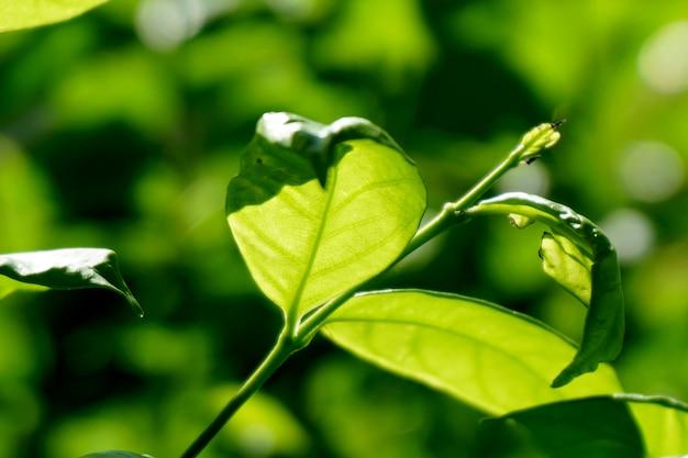 Ecologia naturale del paesaggio vista della natura del primo piano delle foglie verdi