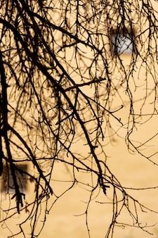 Edificio in cemento sfocato con rami di alberi vuoti