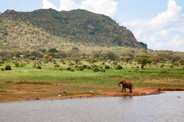Elefante che cammina lungo una riva