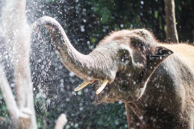 Elefante che gioca con acqua