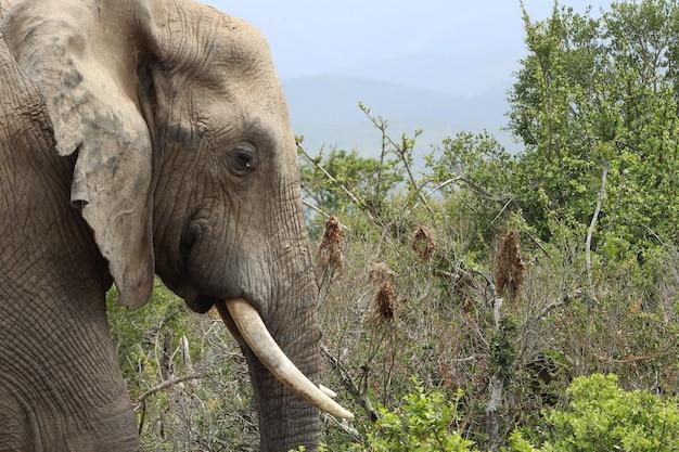Elefante fangoso che cammina intorno a una giungla coperta di vegetazione alla luce del giorno