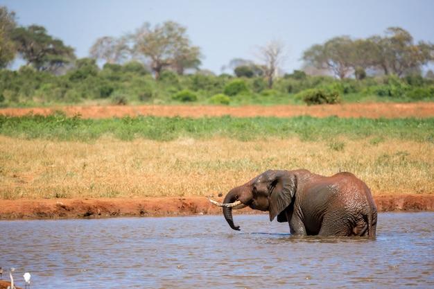 Elefante in piedi in un fiume