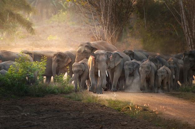 Elefante thailandese in natura