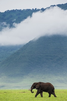 Elefante vicino al cratere ngorongoro