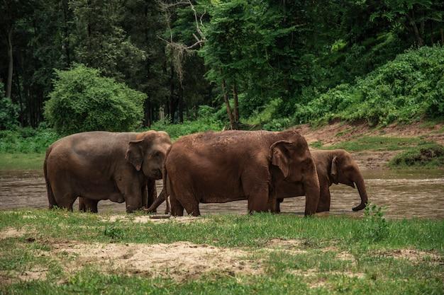 Elefanti a chiang mai. parco naturale dell'elefante, tailandia