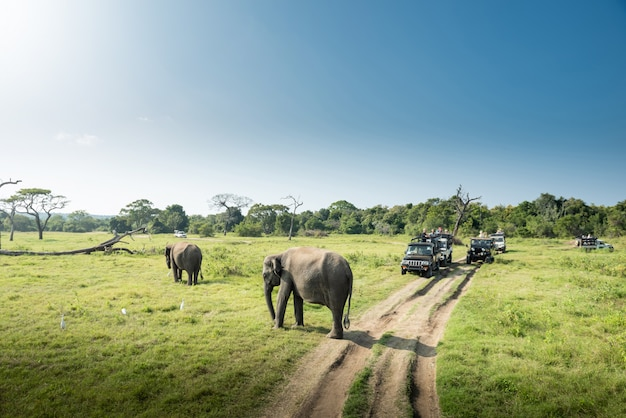 Elefanti selvaggi in un bellissimo paesaggio nello sri lanka