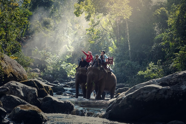 Elephant trekking attraverso la giungla nel nord del laos