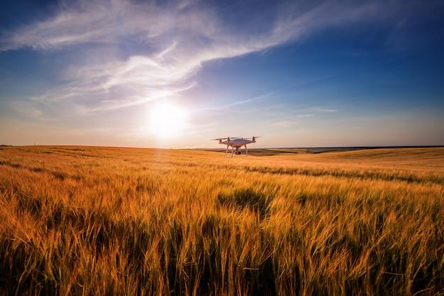 Elicottero del quadrato del drone sul campo di grano verde
