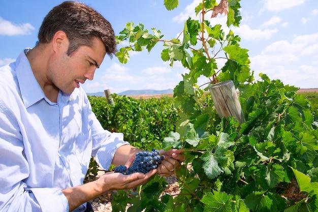 Enologo enologo che controlla le uve da vino tempranillo