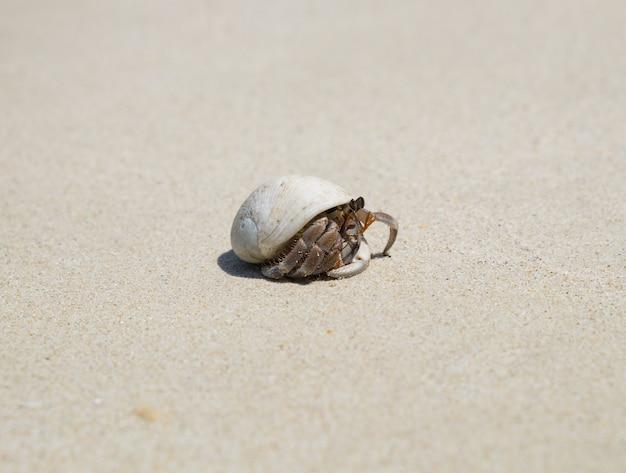 Ensconce di granchio eremita sulla spiaggia