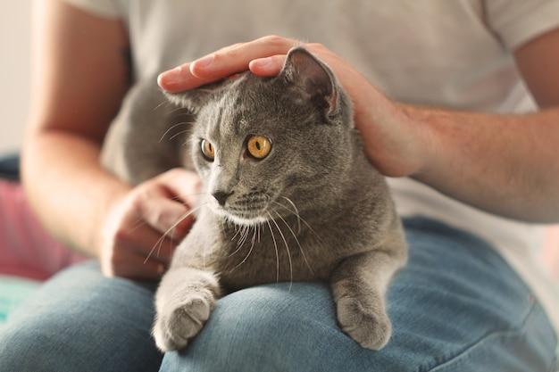Equipaggi accarezzare il gatto grigio lanuginoso, primo piano interno sveglio del gatto blu russo a casa.