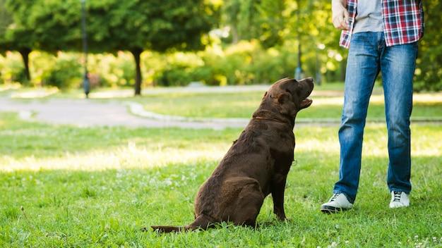 Equipaggi la condizione vicino al suo cane su erba verde
