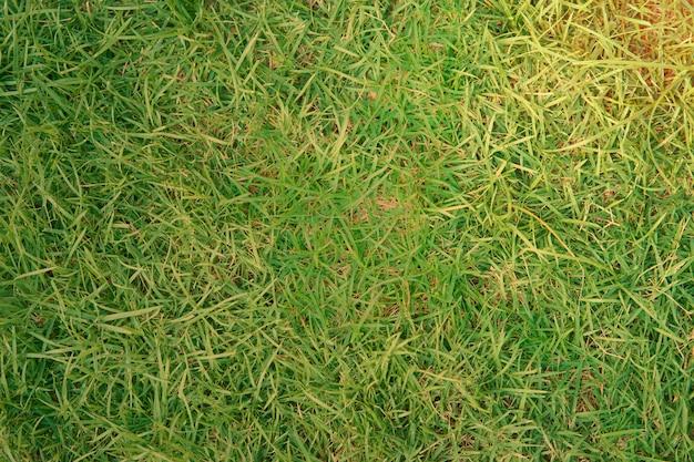 Erba dell'iarda o campo per fondo con flarre del sole