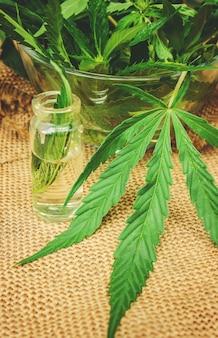 Erba di cannabis e foglie per brodo di trattamento, tintura, estratto, olio. messa a fuoco selettiva