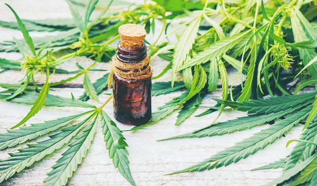 Erba di cannabis e foglie per brodo di trattamento, tintura, estratto, olio.