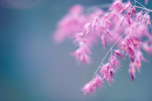 Erba di fiori colorati per lo sfondo